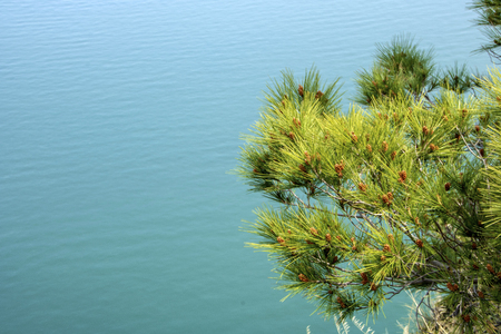 Pine tree and sea on background in  Mount Conero, Italy, Marche region