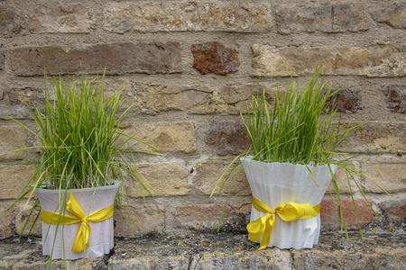decorative white wheatgrass for easter celebration 版權商用圖片
