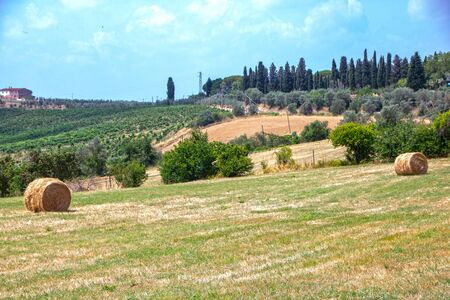 beautiful tuscan countryside on summer in Chianti region, Italy Banco de Imagens