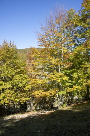 Beech woods of Abruzzo national park in autumn, Italy