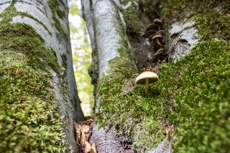 mushrooms growing in the woods of Abruzzo National Park