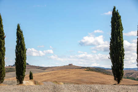 At San Quirico d'Orcia - Italy - On august 2020 - cypress row, better known as cipressini