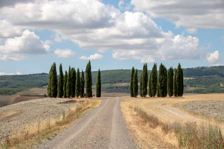 At Montalcino - Italy - On august 2020 - vineyard in tuscan countryside 版權商用圖片