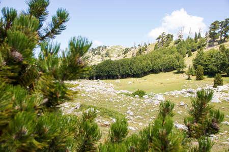 So called Garden of Gods in Pollino National park, where the Bosnian pine, or Pinus Leucodermis lives, Basilicata, Italy