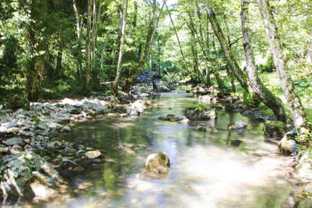 Peschiera torrent flowing in Bosco Magnano wood, in Pollino national park, a wide natural reserve in Basilicata and Calabria, italian regions 版權商用圖片