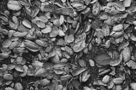 grouping of fall leaves on the ground