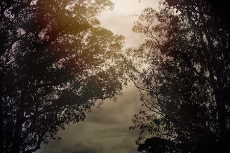 Golden Hour in Nature