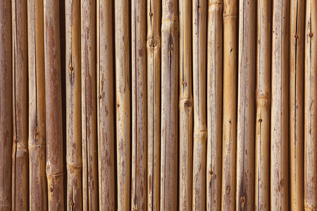 Rows of Bamboo Wall Background