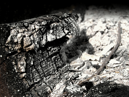 charred: Charred wooden log surrounded by ashes.