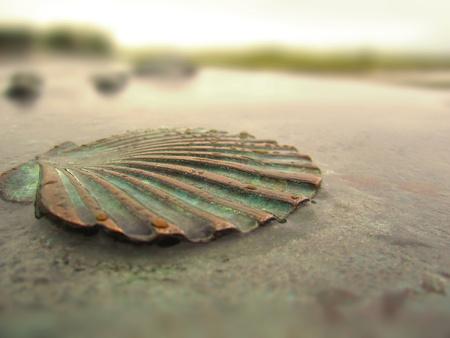 verdigris: Old Copper seashell in rain.