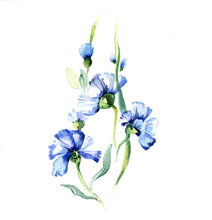 the blue wildflowers watercolor isolated on the white background