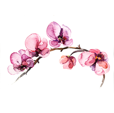 orchid isolated: the watercolor flowers orchid isolated on the white background Stock Photo