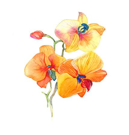la nouvelle vue d'orchidée aquarelle tirée par la main pour la carte postale isolé sur le fond blanc