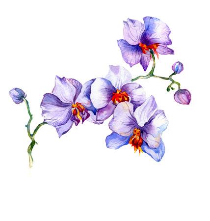 de nieuwe weergave van de orchidee aquarel hand getekende voor briefkaart die op de witte achtergrond Stockfoto