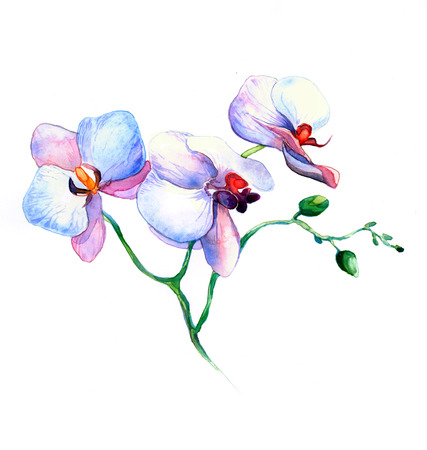 the new view of orchid watercolor hand drawn for postcard isolated on the white background Stock fotó - 52589544