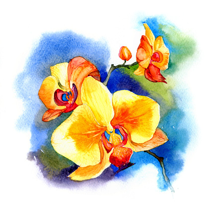 the new view of orchid watercolor hand drawn for postcard isolated on the white background Stock fotó - 52589545