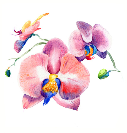 the new view of orchid watercolor hand drawn for postcard isolated on the white background Stock fotó - 52589547