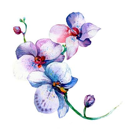 la nueva vista de la mano de la orquídea de la acuarela dibujado para la postal aislada en el fondo blanco