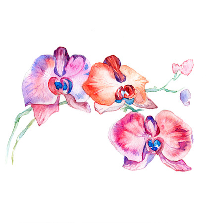 the new view of orchid watercolor hand drawn for postcard isolated on the white background Stock fotó - 52589552
