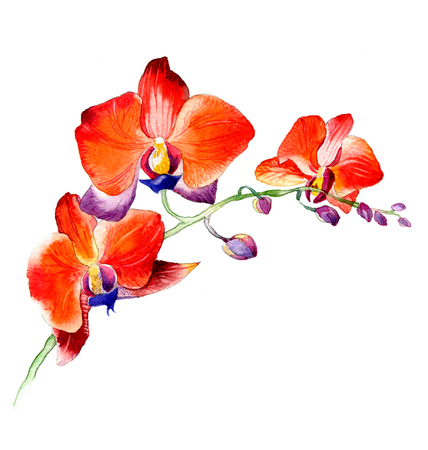 the new view of orchid watercolor hand drawn for postcard isolated on the white background Stock fotó - 52589735