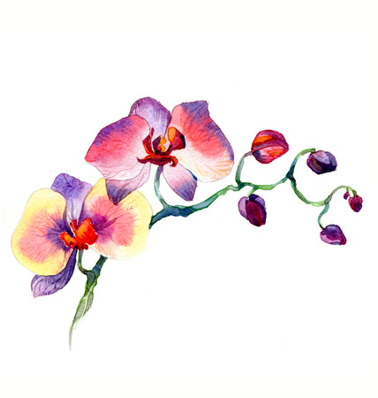 the new view of orchid watercolor hand drawn for postcard isolated on the white background