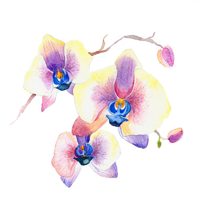 the new view of orchid watercolor hand drawn for postcard isolated on the white background Stock fotó - 52589766