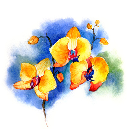 the new view of orchid watercolor hand drawn for postcard isolated on the white background Stock fotó - 52589795