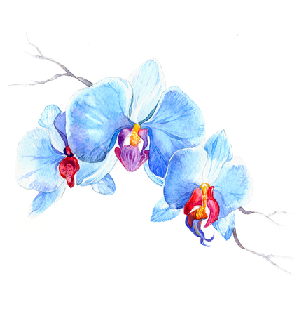 the new view of orchid watercolor hand drawn for postcard isolated on the white background Stock fotó - 52589810