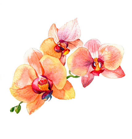 the new view of orchid watercolor hand drawn for postcard isolated on the white background Stock fotó - 52589813