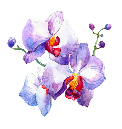 the new view of orchid watercolor hand drawn for postcard isolated on the white background Stock fotó - 52589818