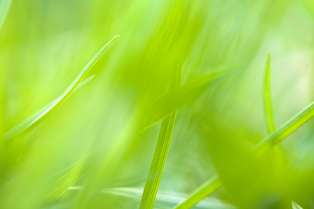 the texture of green blur and soft outdoor for background Stock fotó