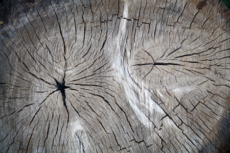 the texture of wood for background or design Stock fotó - 53762657