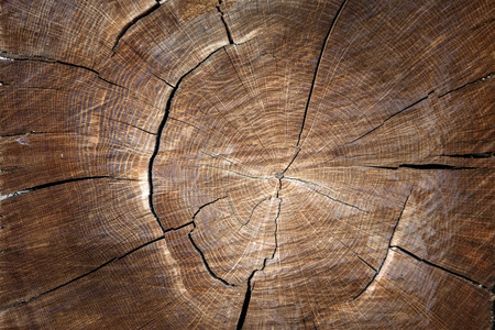 the texture of wood for background or design Stock fotó - 53762676
