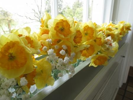 Windowsill daffodils Stok Fotoğraf