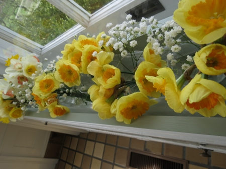 Spring window daffodils