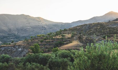Landscape with olive trees plantations and mountains on the background. Stok Fotoğraf