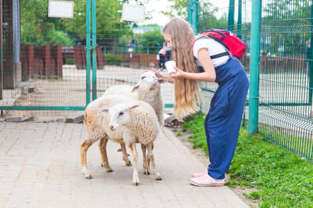 Caucasian girl in a blue overalls and with a red backpack stroking and feeding white curly sheep at petting zoo. Visit to zoo, love and care for pets. Stockfoto