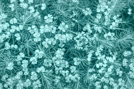 A colorful background of flowers and grass in trending color 2021 - Tidewater Green, 2f4f4f. Floral background, natural background, universal background. Gardening, plant growing. Top view.