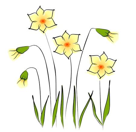 daffodils: Flowers - daffodil Illustration