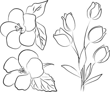 contorno: dos flores de hibisco y ramo de tulipanes - a mano alzada