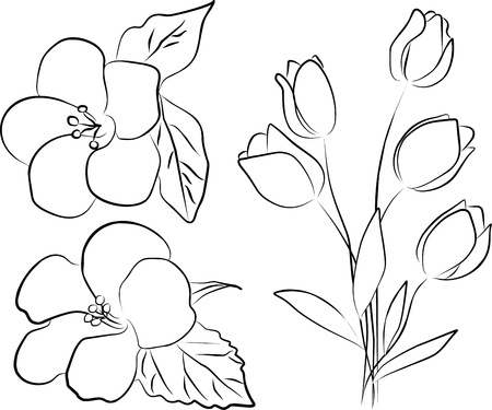 outline flower: two hibiscus flowers and tulip bouquet - freehand