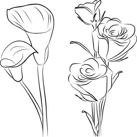 calas blancas: dos calas de flores y rosas a mano alzada - tres