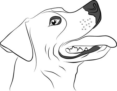 dog head: hunting dog isolated on white background - freehand