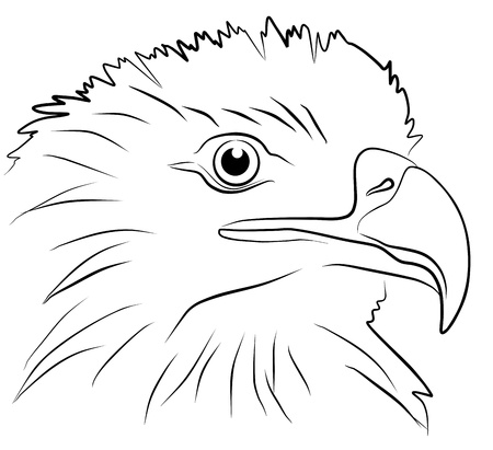 savage: eagle head isolated on white background, vector illustration
