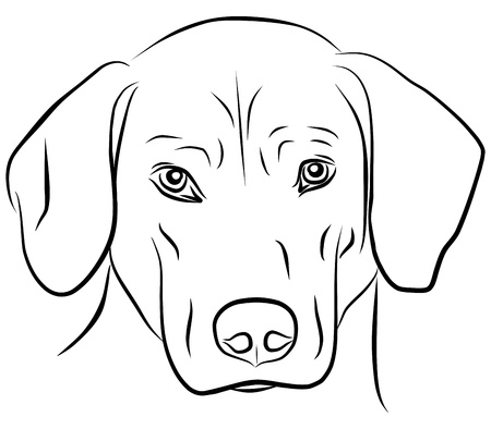 hunting dog: dog isolated - freehand, vector illustration Illustration