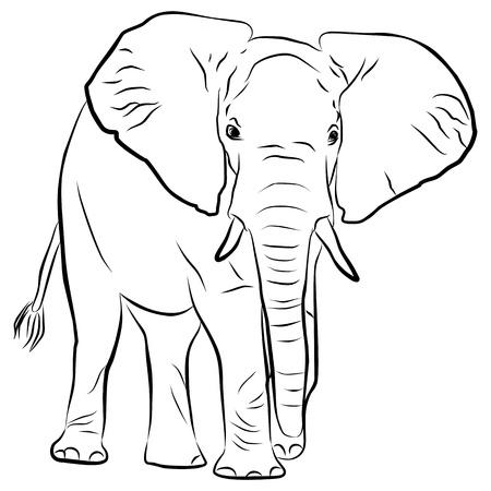 elefantes: la silueta del elefante - a mano alzada, ilustración vectorial