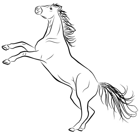 clydesdale: horse sketch on a white background, vector illustration Illustration