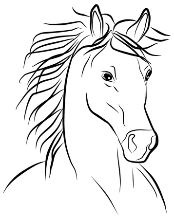 horses in the wild: horse portrait on a white background, vector illustration