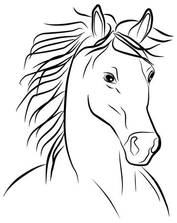 cabeza de caballo: Retrato del caballo sobre un fondo blanco, ilustración vectorial Vectores