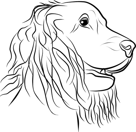 dog portrait on a white background, vector illustration Vector